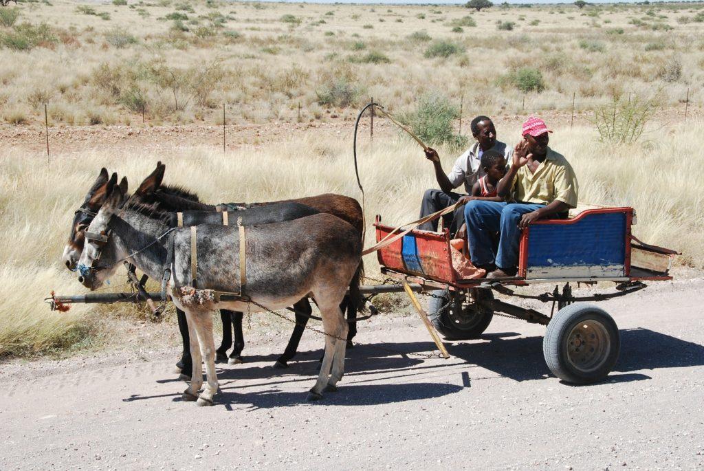 Les ânes à Niamey